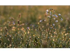 kleine Naturwelt (6)