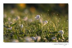 kleine Naturwelt (8)