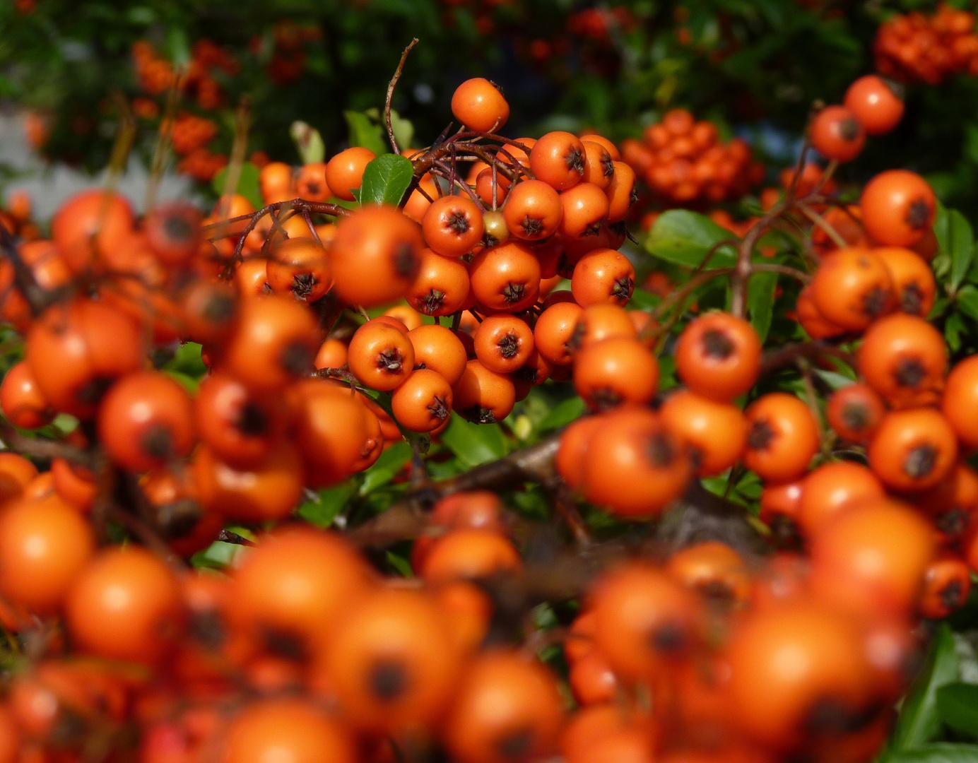 Kleine Orange(n)