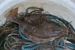 Kleine Ostseefischerei