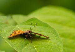Kleine Pause - Schmetterling (2)