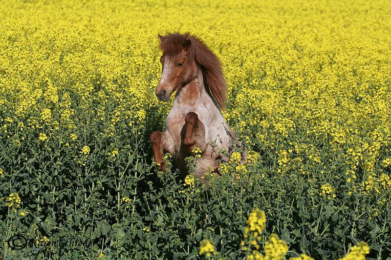 Kleine Ponymaus....