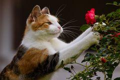 Kleine Rosenliebhaberin