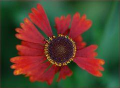 Kleine rote Sonne