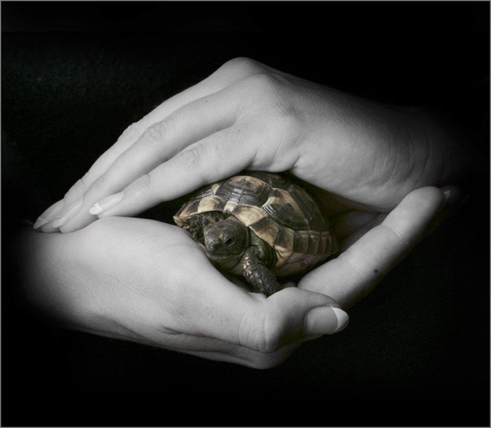 ...kleine Schildkröte...