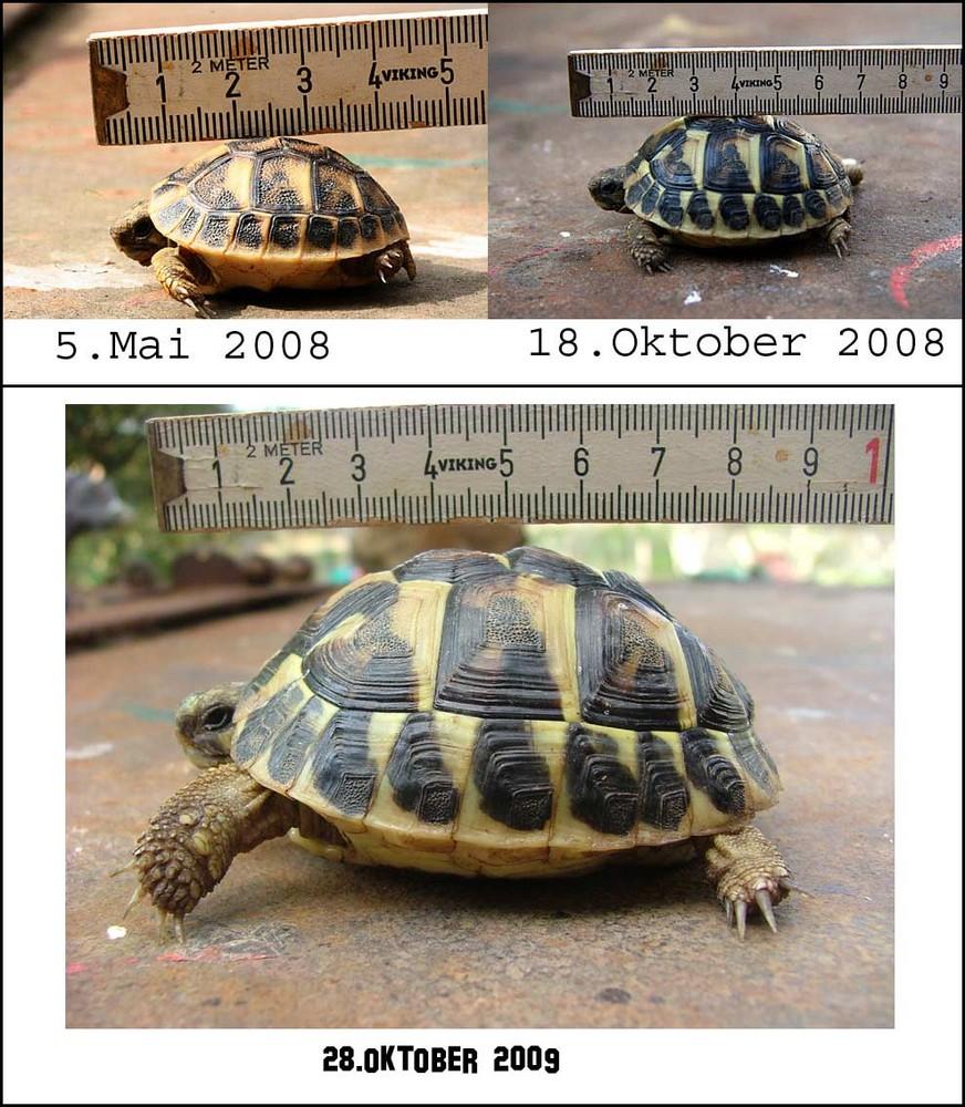 Kleine Schildkröten-Doku