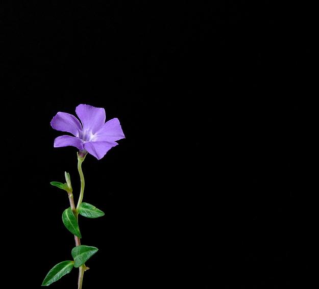 kleine Schönheit