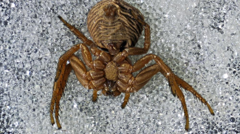 Kleine Spinne vvon unten