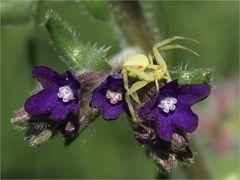 kleine Spinnenwelt