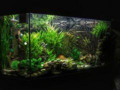 Kleine Unterwasserwelt