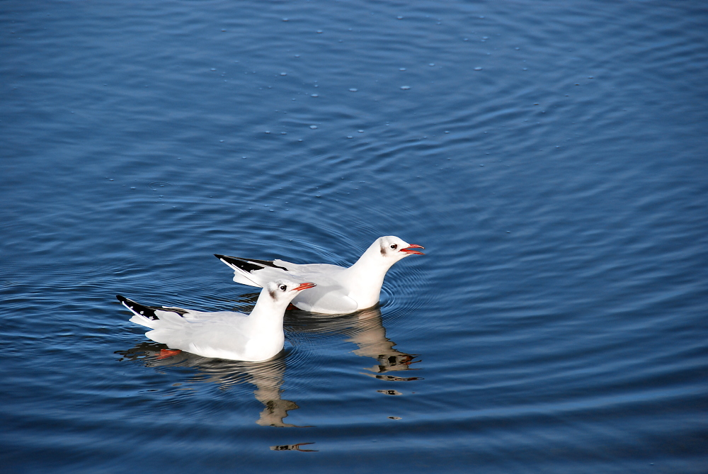 kleine Vogelserie II