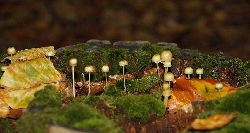 Kleine Waldbewohner