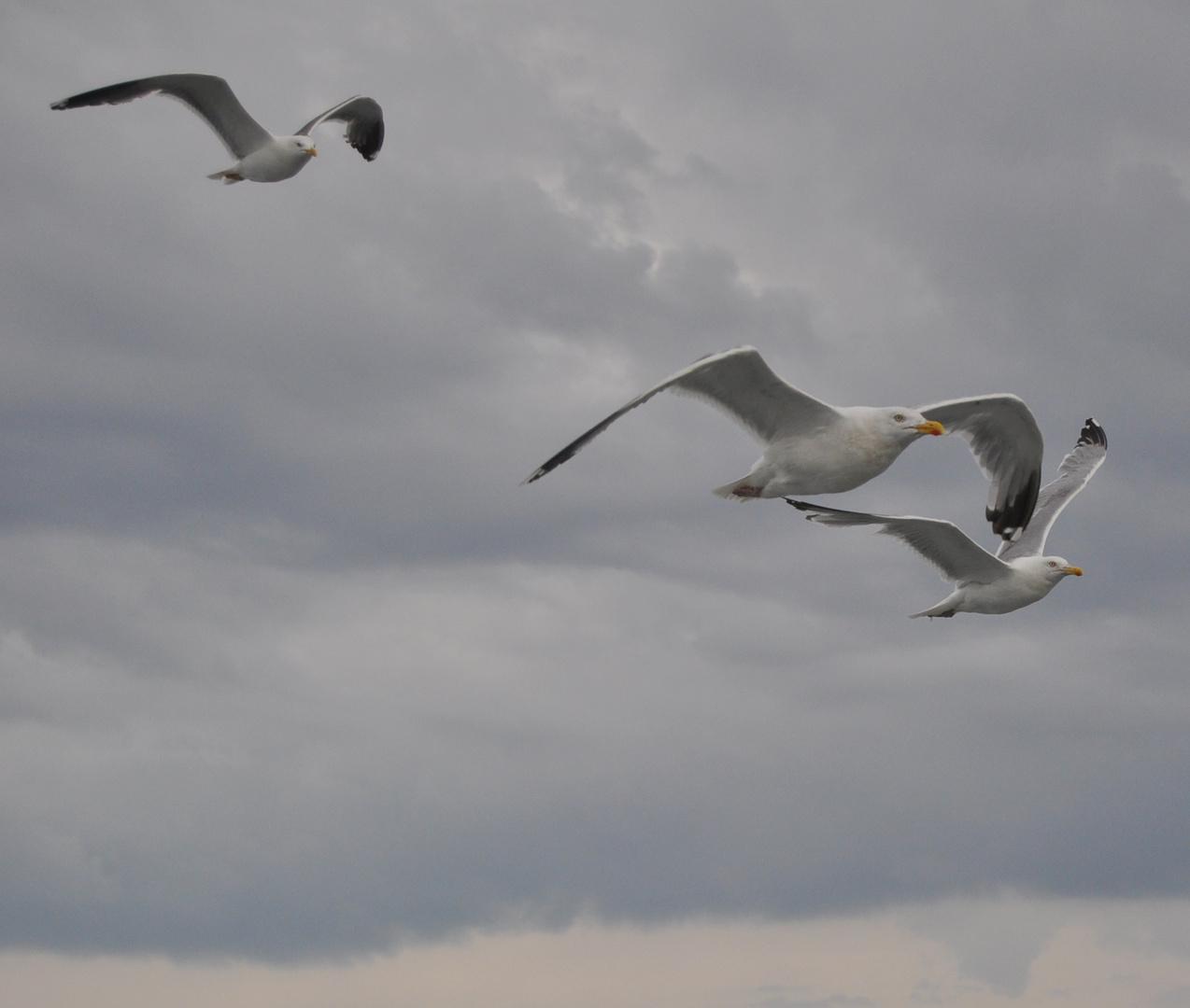 Kleine weiße Möwe flieg nach ..................................