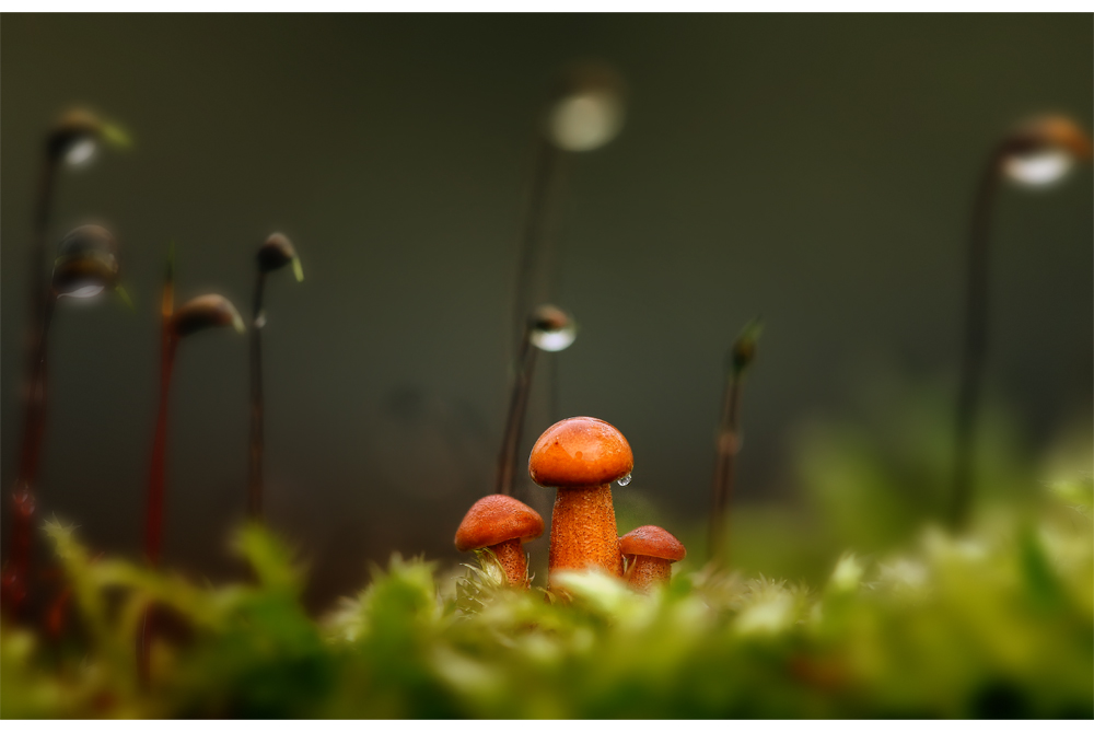 kleine Welt