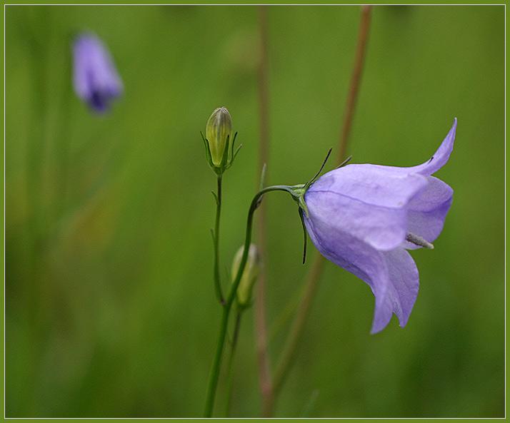 Kleine Wildblume