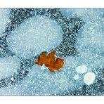 Kleine Winterruhe: Vergänglichkeit auf Eis gelegt... (s. ANALYSE der KOMPOSITION)