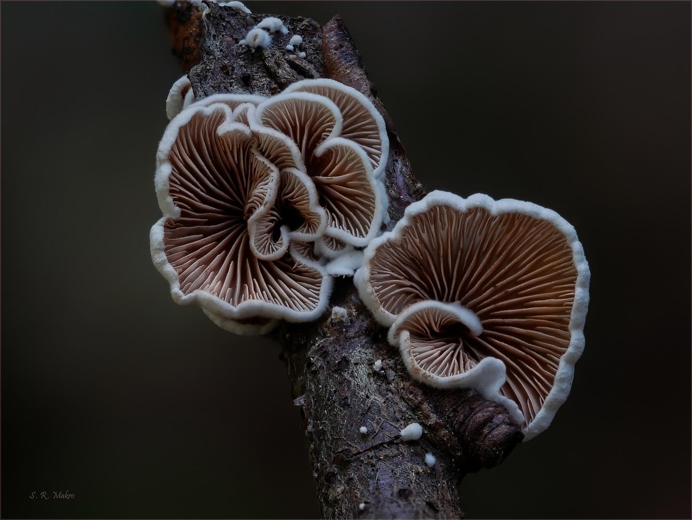 Kleine Wunder der Natur