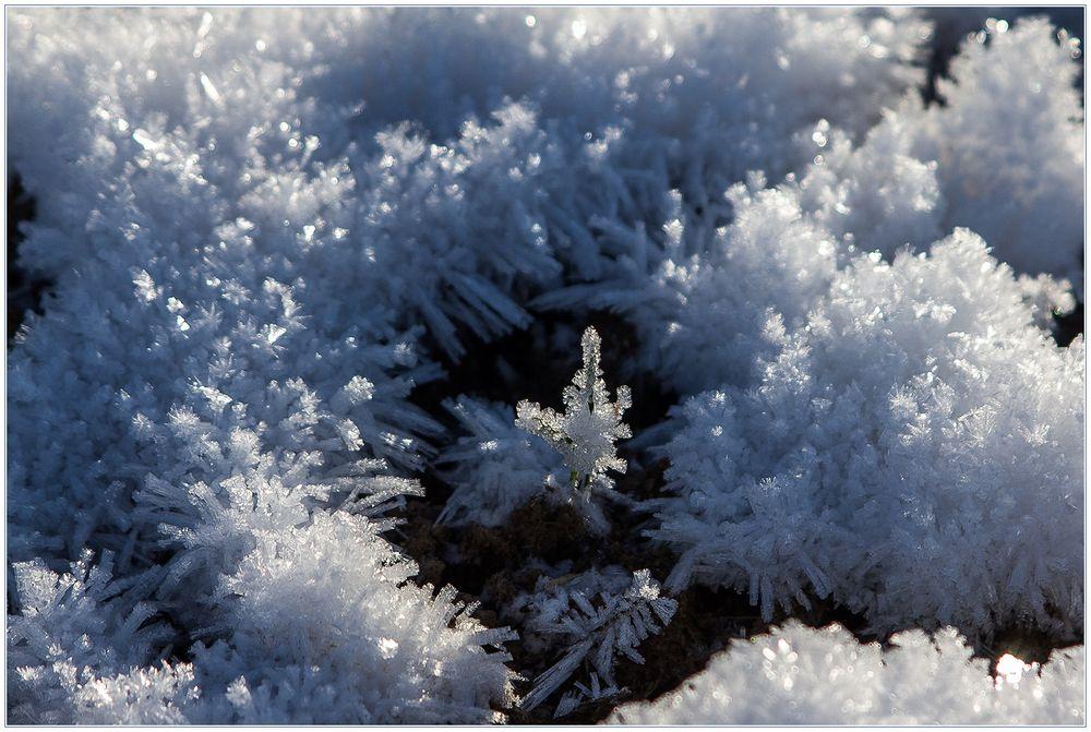 Kleine, zierliche Eis-Welt, vergänglich... (mit Kompositions-Analyse !)