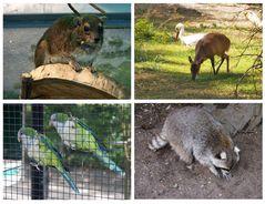 Kleiner, aber feiner Hofer Zoo