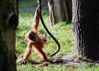 Kleiner Affe ganz groß.