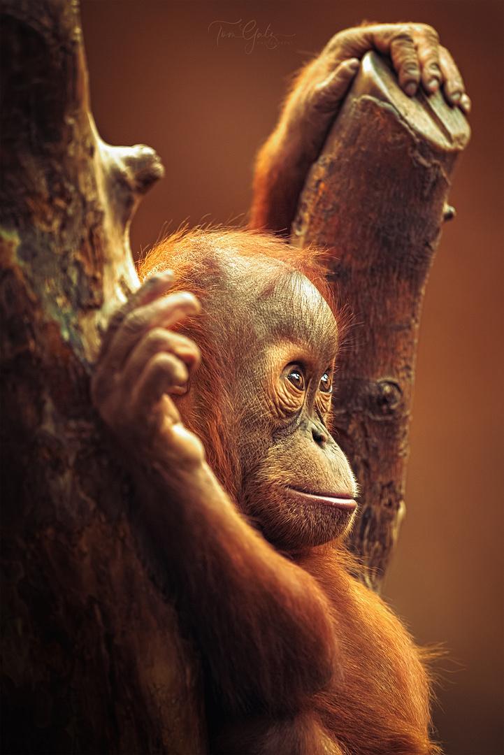 kleiner Affe - Seitenportrait