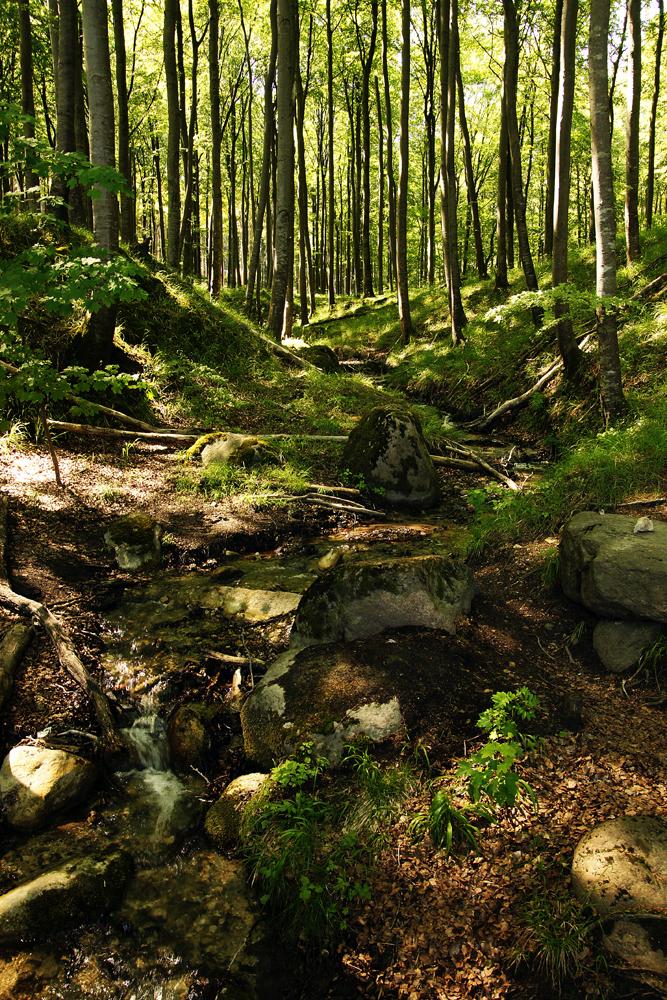 Kleiner Bach im Jasmunder Nationalpark