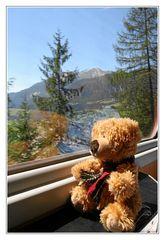 Kleiner Bär auf großer Reise