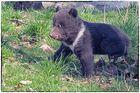 Kleiner Bär - was nun?