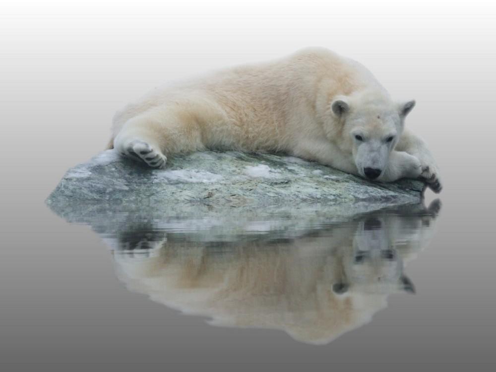 Kleiner Bär was nun, das Eis ist weg