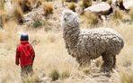 kleiner Bauernjunge - grosses Tier ... in Peru