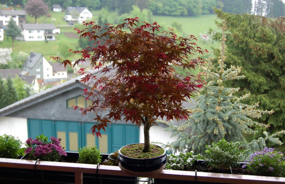 Kleiner Baum Ganz Gross Foto Bild Pflanzen Pilze Flechten