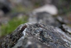 - Kleiner Bergsteiger -