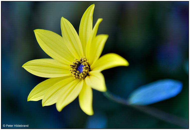 kleiner Blütengruß