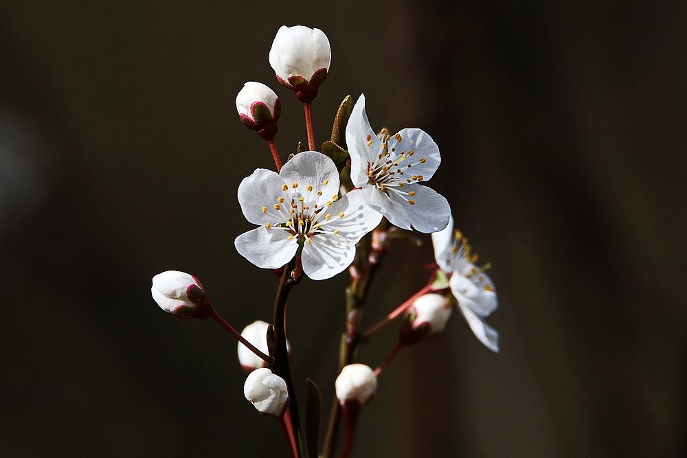kleiner Blütentraum