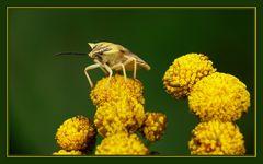 Kleiner Blumenhocker