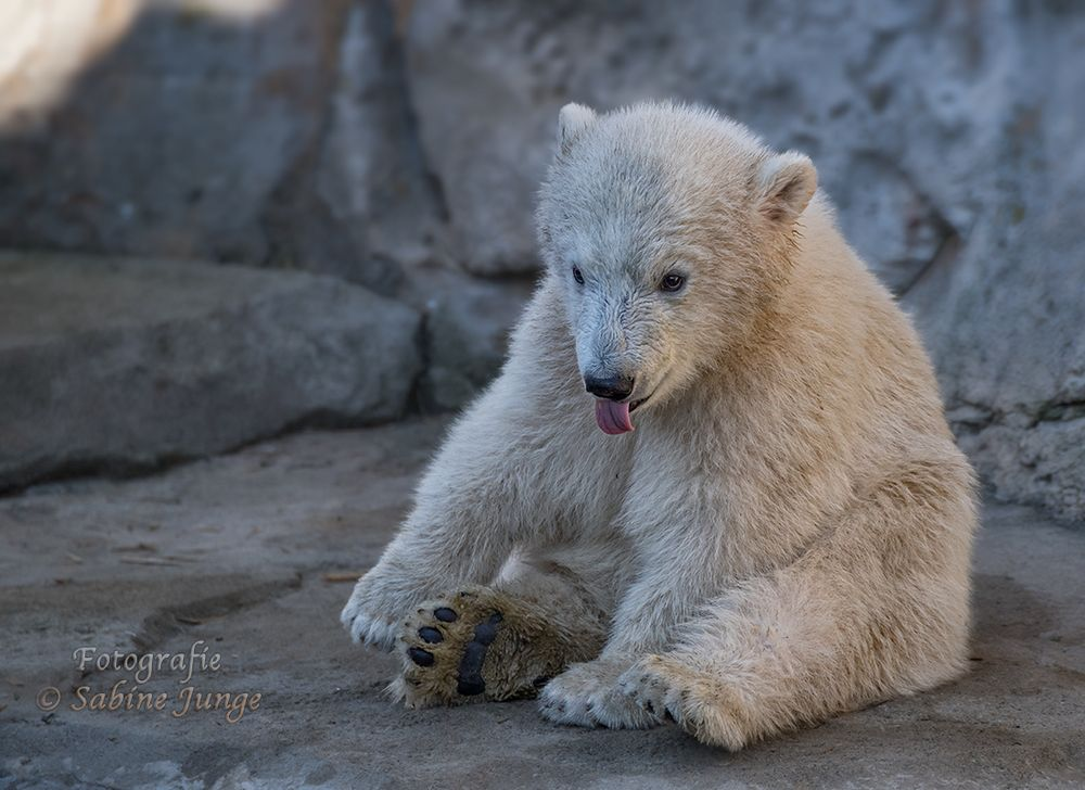 Kleiner Eisbärenteddy