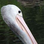 Kleiner Flirt mit großem Vogel