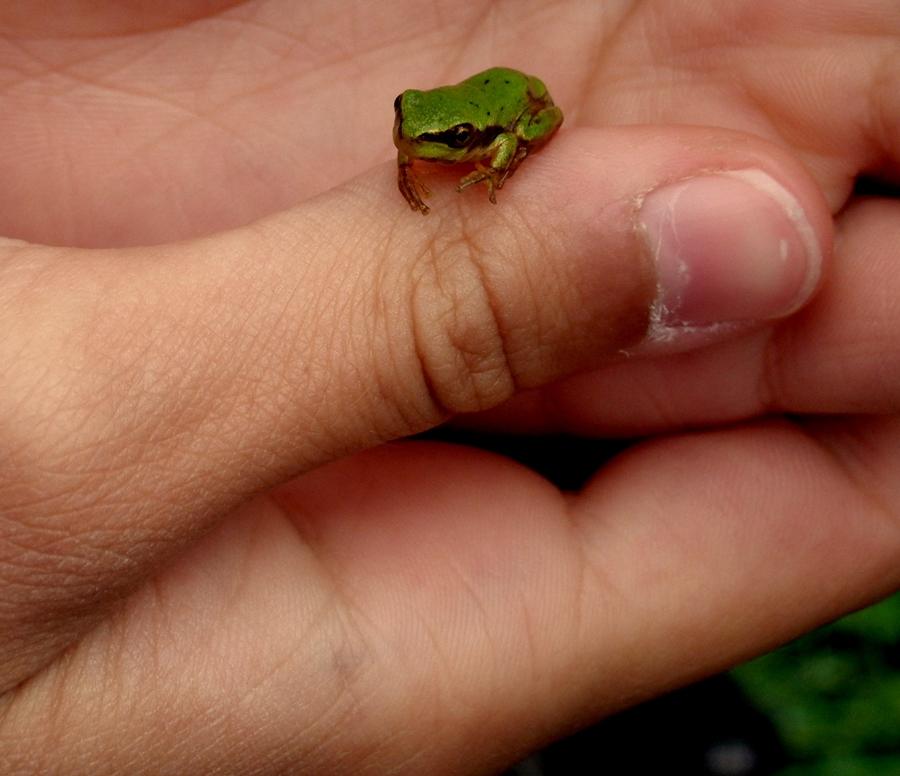 kleiner Frosch :)