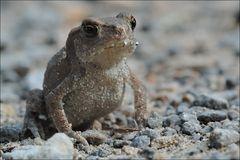 Kleiner Frosch ganz groß