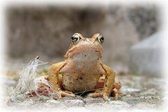Kleiner Frosch vor meiner Tür