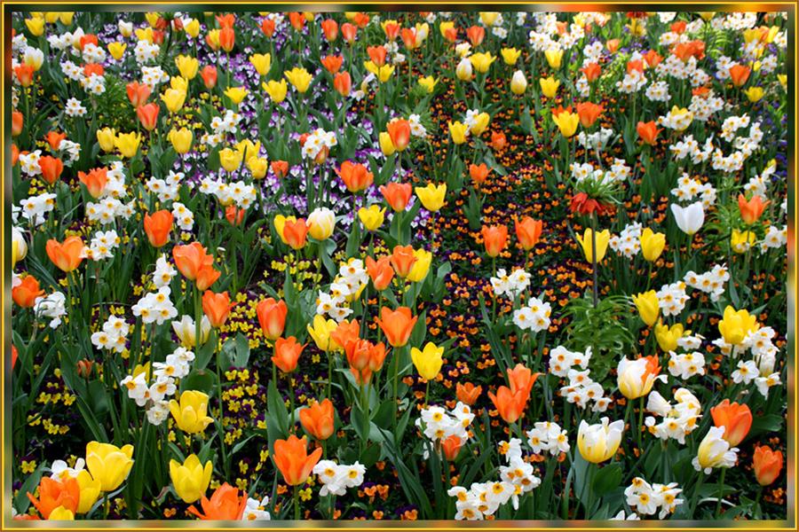 Frühlings