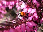 ...kleiner Frühlingsbote