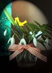 Kleiner Frühlingsgruss für Alle