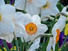 Kleiner Frühlingstraum