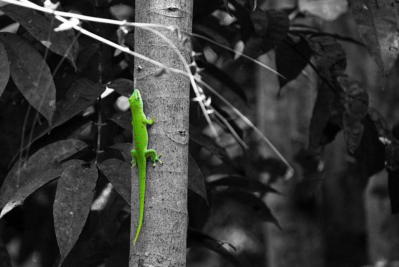 kleiner grüner