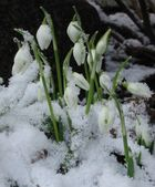 Kleiner Gruß vom Winter