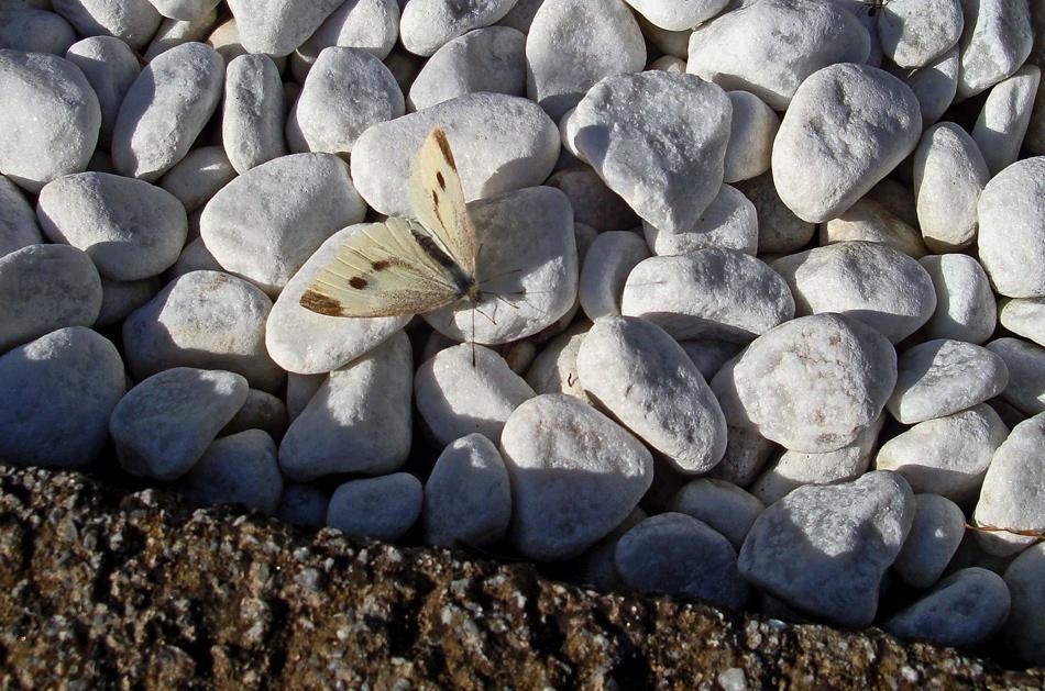 Kleiner gut getarnter Schmetterling!