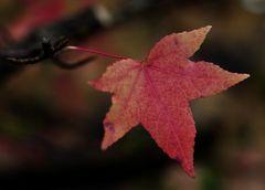 Kleiner Herbst