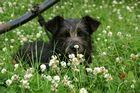 Kleiner Hund