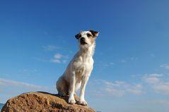 Kleiner Hund ganz groß :-)
